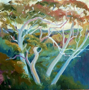 Dancing ghost gums, Springbrook, oil on canvas board, 30x 30 cms.