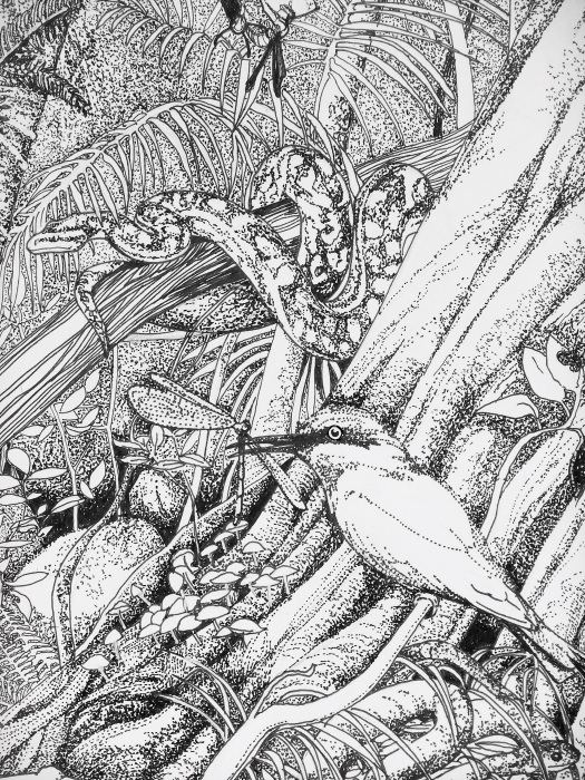 Mr. Darwin's Lovely Thought - detail 1 - Pen and Ink on Canson paper Rainbow bee-eater and carpet python