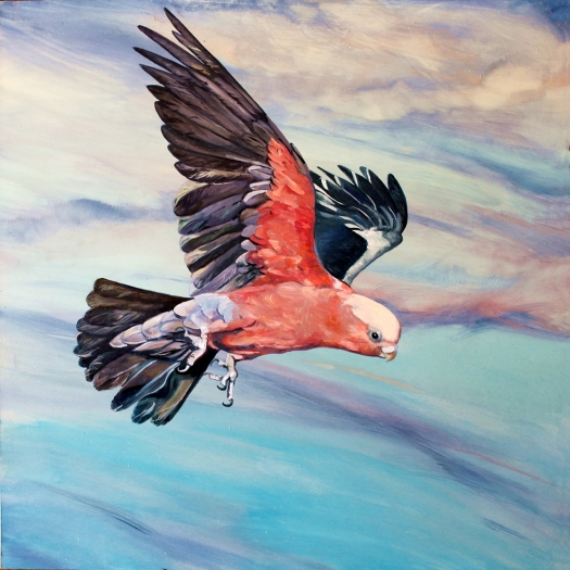 The Art of Riding on the Wind No. 9 Galah a
