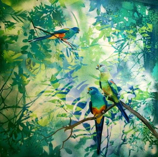 whispers - mulga parrots wip web